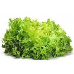 insalata riccia