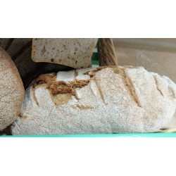 Pane del Pellegrino - filone con farine San Pastore e Senatore Cappelli