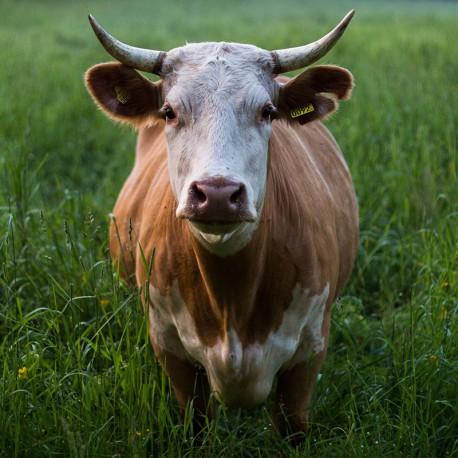 Pacco Carne Bovina Fresca 5 KG