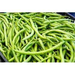fagiolini verdi