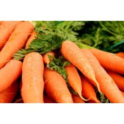 carote – bio