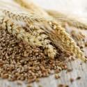 Cereali, Legumi e Farine