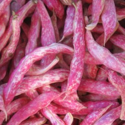 fagioli borlotti freschi